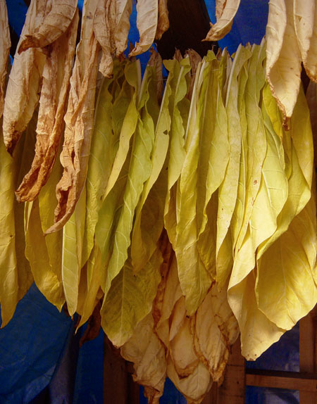 tobacco-drying