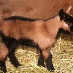 goatboy-IMG_4887