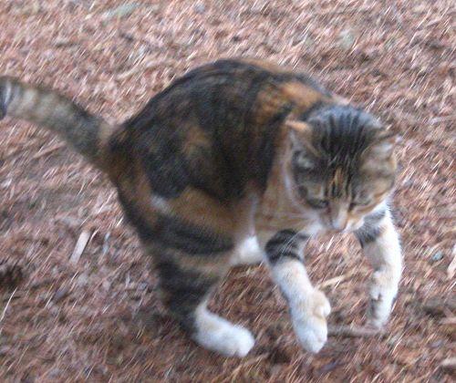 babycat5