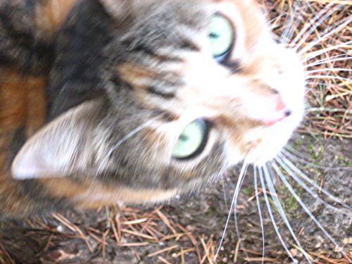 babycat8