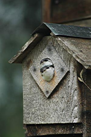 Birdhead II and Runtley #3