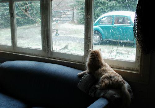 wayne at front windows