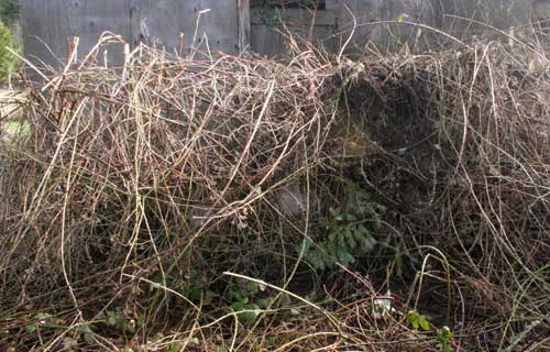 blackburied fence
