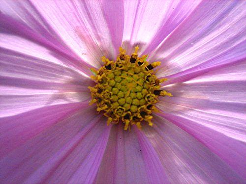 backlit fleur