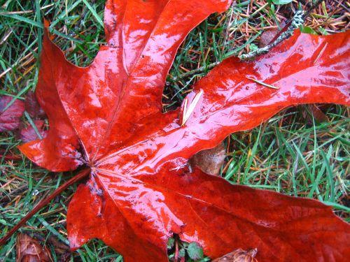 day-glow leaf