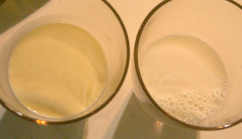 Raw, fresh milk from a pasture-raised cow (left) and anemic-looking supermarket milk