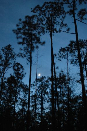 Moon over Blackwater River State Park in Florida