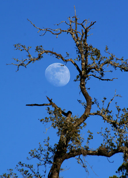 moon fruit