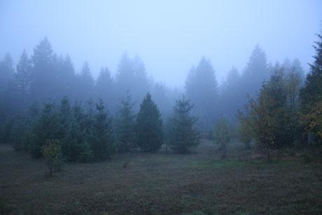 Foggy Oregon morning