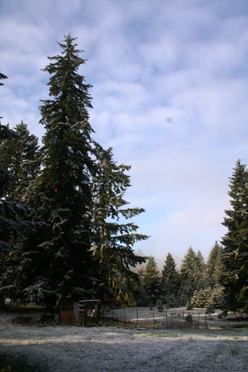Snowy goatlandia