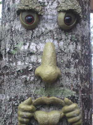 Pensacola KOA tree face