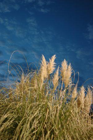 weeds_sky